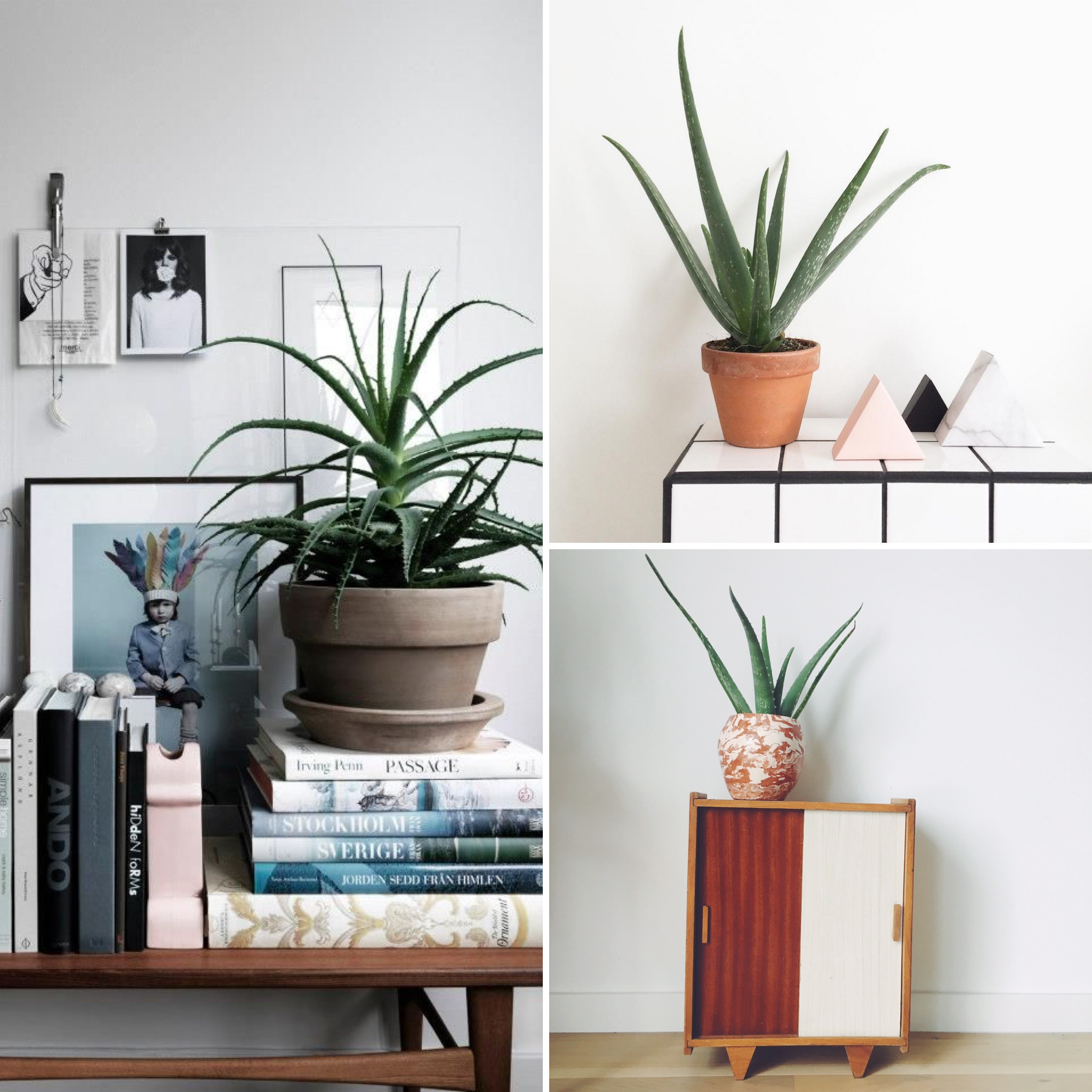 Les IT plantes | elephant in the room